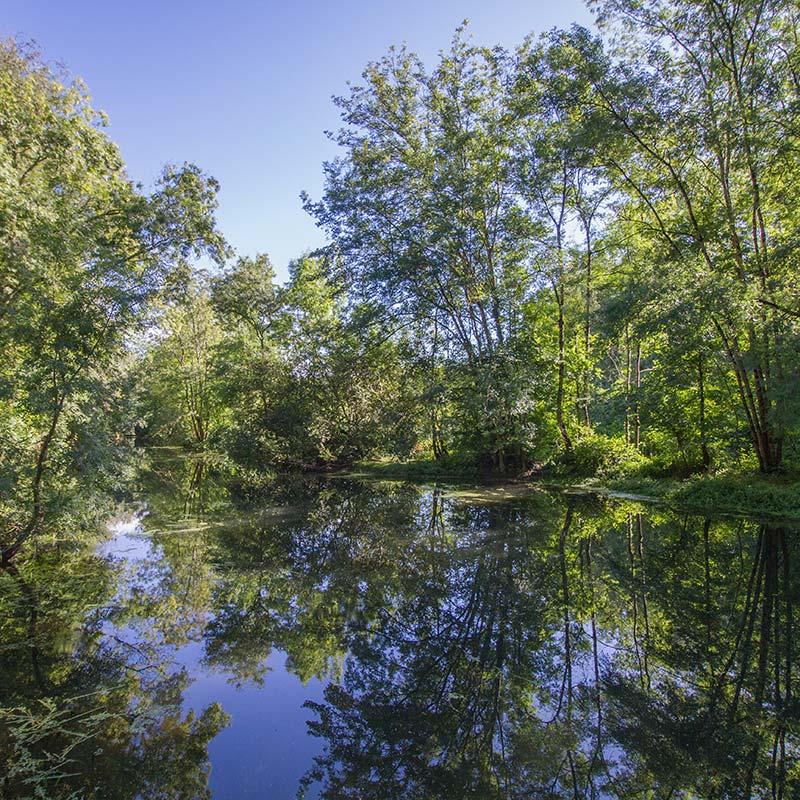 Boisements rivulaires, habitats à Vison d'Europe - LIFE Vison