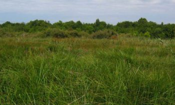 Restoration of 4 hectares of suitable habitats for the European mink in the Anglade marsh!