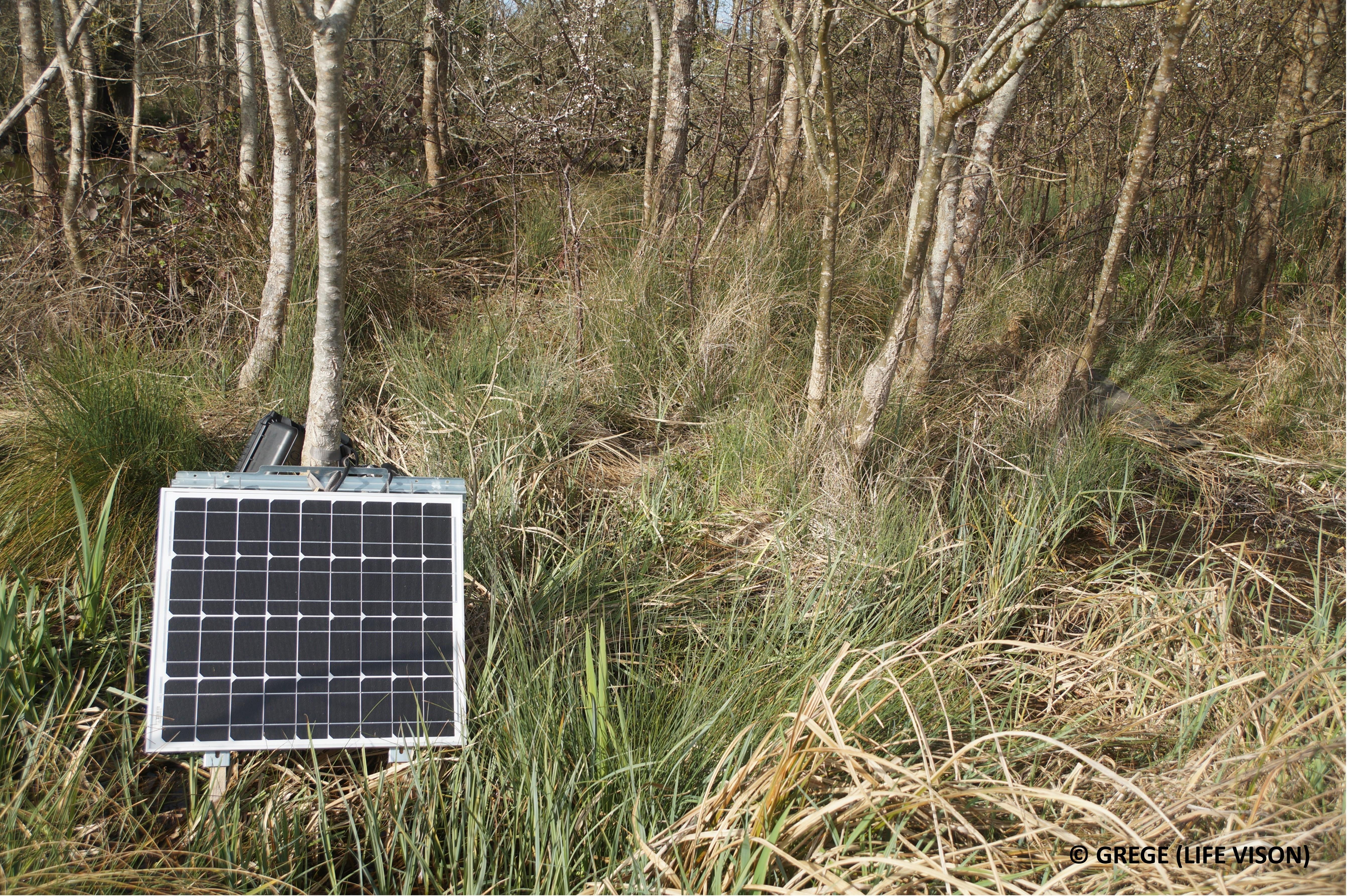 Panneau photovoltaïque alimentant la batterie du lecteur automatique de puces