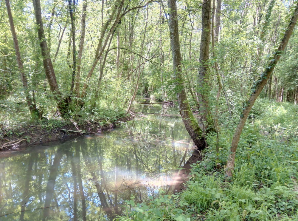 Bramerit, tributary of the Charente