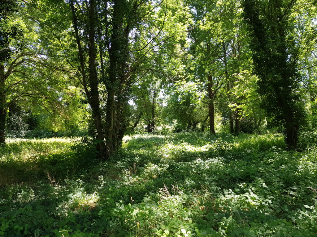 Parcelle communale de Mouthiers-sur-Boëme